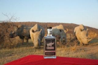 Black Rhinos With Urban Rhino Gin